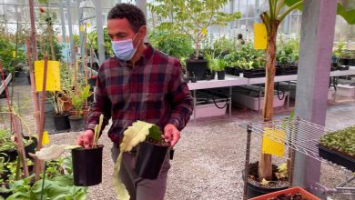 This Boston Greenhouse Got Just $810 From the PPP. Is More Help Coming?
