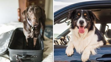 Pets abroad rules: What are the rules for taking pets abroad in Brexit deal?