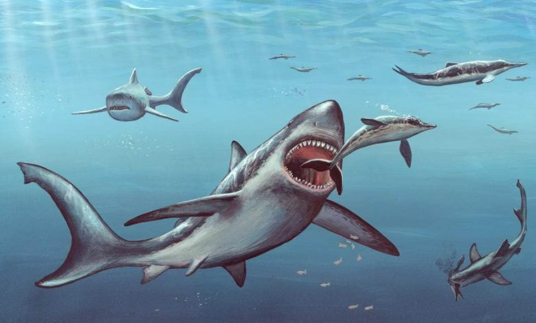 Megalodon shark fossils suggest that newborns were larger than adult humans: Study