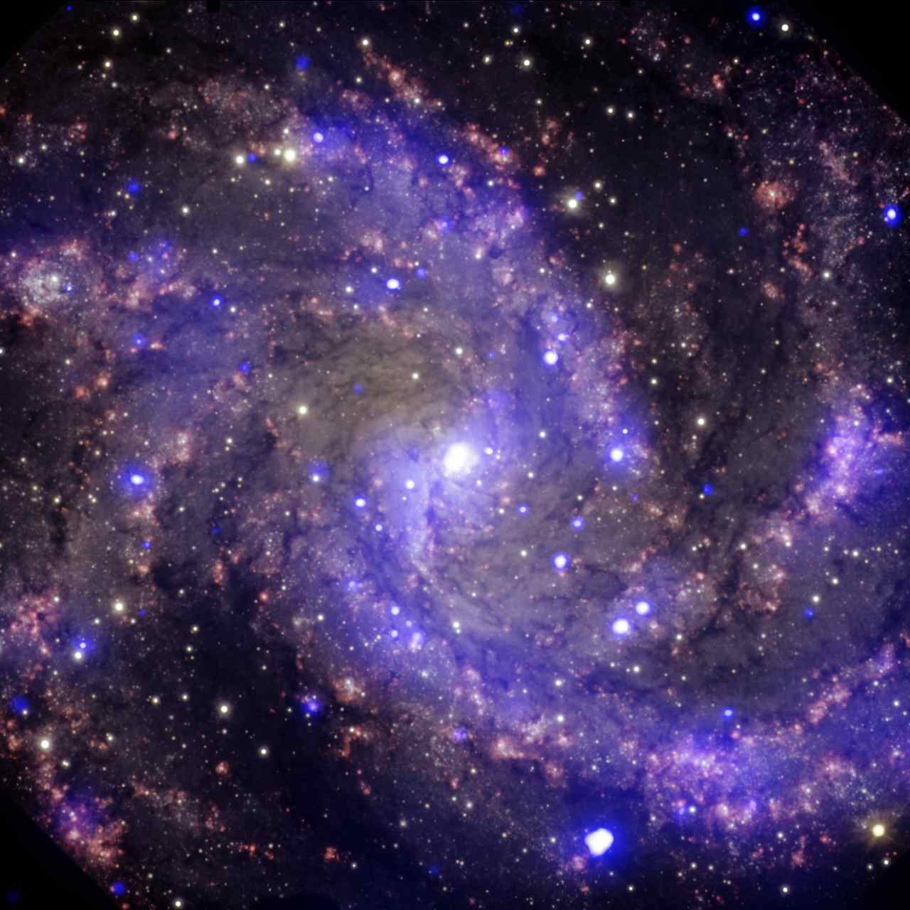 NASA shares Hubble image of dazzling supernova-prone fireworks galaxy NGC 6946