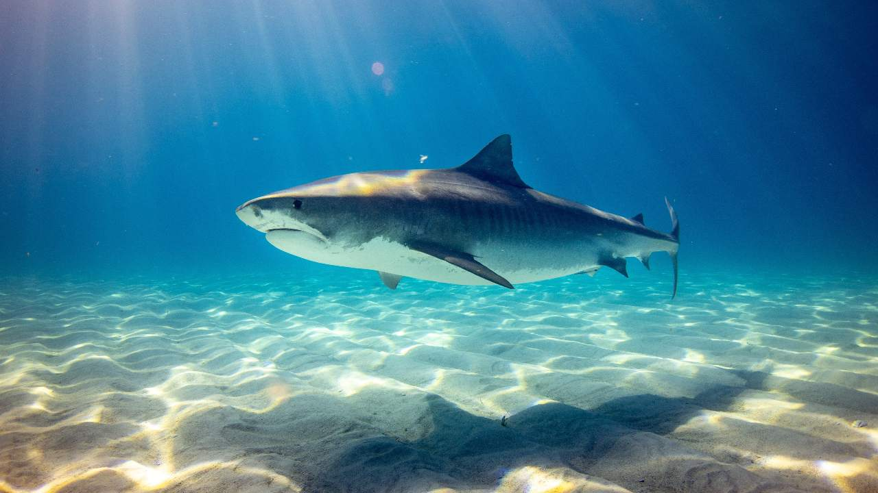 Number of sharks, rays have fallen more than 70 percent between 1970-2018