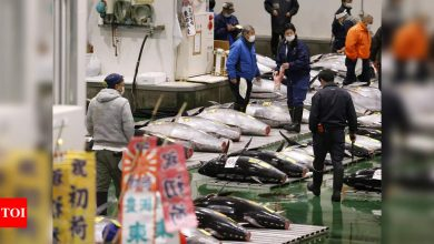 Pandemic overshadows Japan's New Year tuna auction - Times of India