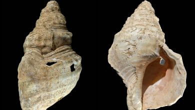 Oldest shell horn found in a cave in 1931 plays its songs as clear as the sea- Technology News, Firstpost