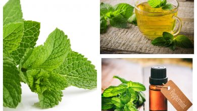 Do you know the difference between peppermint and spearmint?  | The Times of India