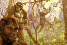 Human ancestor Ardi may have swung from trees like chimps till 4.4 mn years ago