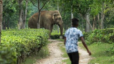 Human lives lost to wildlife-human conflict should be compensated better: Scientists