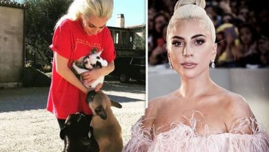 Lady Gaga's dog walker shot four times by two men as singer's French bulldogs stolen