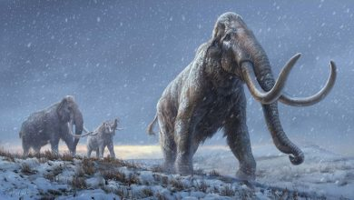 Scientists rewrite mammoths family tree using DNA from fossil thats more than one mn years old
