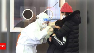 Seoul launches Covid tests for pets - Times of India