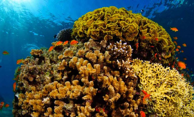 UAE-Israeli oil pipeline is an ecological disaster, threat to Red Sea coral reef