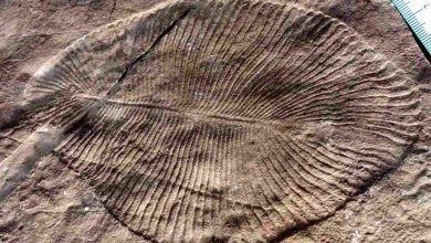 Unlikely fossil dug up in Bhimbetka ties together evolution of modern life in India, Australia