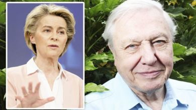 David Attenborough felt EU 'did not pay enough attention' to Britain before Brexit