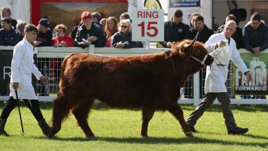 Coronavirus in Scotland: Royal Highland Showcancelled for second year due to pandemic