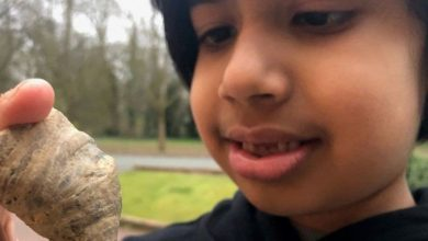 Six-year-old stumbles on coral fossil from million of years ago in England garden- Technology News, Firstpost