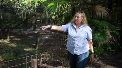 'Tiger King': Carole Baskin is working on a big cat documentary series