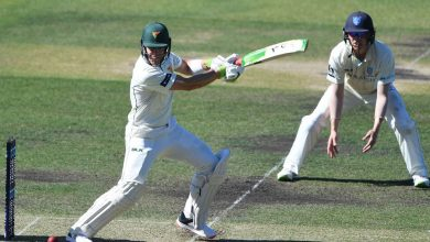 Tim Paine and Matthew Wade hit half-centuries but Mitchell Starc dents Tasmania