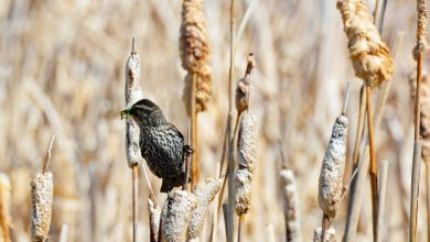 The best places in Canada for birdwatching