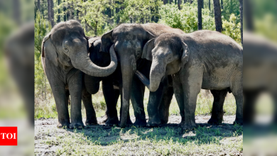 Former circus elephants begin to arrive at Florida sanctuary - Times of India