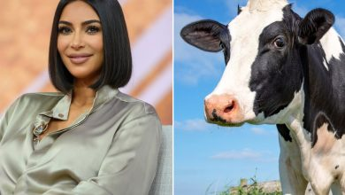 PETA names rescue cow after Kim Kardashian to honor her no-meat diet