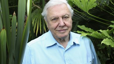 Watch the trailer for David Attenborough's new doc 'Breaking Boundaries'