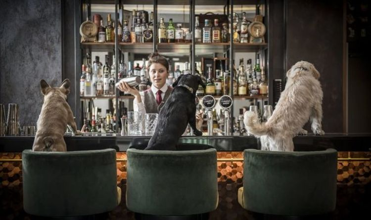 Cheers to this: London cocktail bar creates dog-friendly cocktail menu