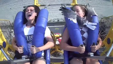 Teen slapped in the face by a seagull on 75-mph Sling Shot ride