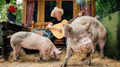 UK's first ever vegan pig festival taking place in Yorkshire this weekend