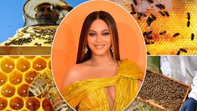 Bee-yond! Beyoncé reveals she is raising honey bees at home