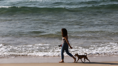 Treat your pooch to these six dog-friendly beaches for a last-minute bank holiday getaway