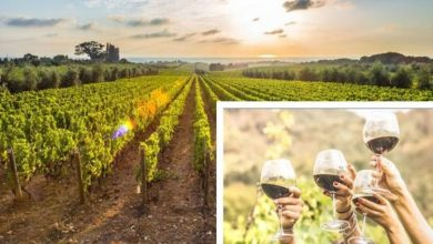 Wine-filled staycation: Book these top ten ranked UK vineyards from a cow shed to a jail