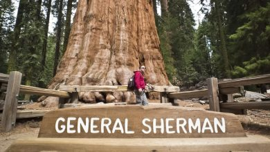 Why the world's biggest tree, General Sherman, should be allowed to burn –Scotsman comment